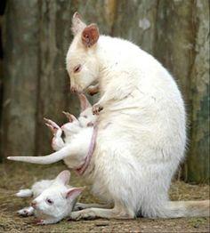 Albino Menagerie