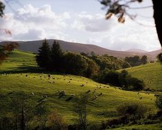 Co Waterford, Ireland Farmland Near by The Irish Image Collection . Waterford City, Waterford Ireland, Surfing Ireland, Irish Images, Hawaii Surf, Emerald Isle, Travel Inspiration, Mountains, Wave