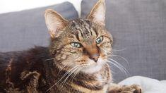 Romeo, like Alfa Romeo (not like Romeo and Juliet) 15 years old tomcat