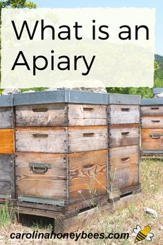 What is an Apiary? A place with gorillas maybe ? No - it's all about honeybees. Explore the meaning of the word apiary. #carolinahoneybees