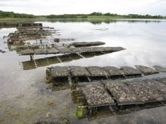 Facts about Oyster Farming
