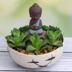 Create an ideal corner of serenity with Buddha-themed mini gardens! Widely used as tabletops and decorative zen gardens, these packs are perfect for indoor or outdoor placements. Succulents Garden, Garden Pots, Planting Flowers, Flowering Plants, Planter Accessories, Buddha Garden, Garden Online, Free Plants, Bulb Flowers