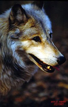 smiley wolf
