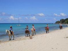 Paul & Jills Horseback Riding - St. Croix, USVI