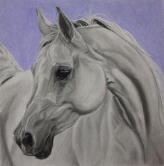 White Arabian Horse - Fine Art Giclee Print