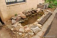 cool idea to conserve water, feed the veggies and have a safe pond