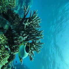 Great Barrier Reef  #greatbarrier  #greatbarrierreef #island #islandlife #love #indonesia #indo #asia #ajasinasia #kuta #seminyak #cairns #australia #lovethelifeyoulive #livethelifeyoulove #travelgram #traveler #travel #traveling #travelers #worldtraveler #wanderlust by ajajade_ http://ift.tt/1UokkV2