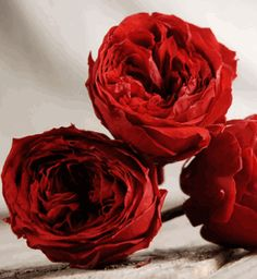 Preserved Natural Red Roses (8 rose heads) Flowers- This site has a TON of preserved plants and flowers.. kinda cool way to do decor!