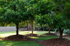 North Coast Garden Landscape Architecture