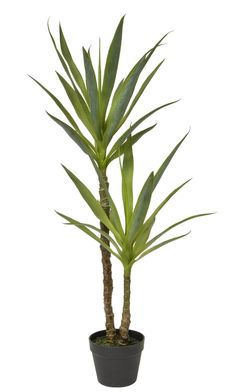 Artificial Yucca Plant 110cm Artificial Plants And Trees, Fake Plants, Plant Decor, Mood Board Interior, Trees Online, Plastic Pots, Reception Areas, Tropical Plants, Ornaments