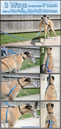 View full size here. I've found that a plain ol' leash makes a better training tool than any of the harnesses or haltis on the market. No need to spend money if you already have what you need! 3 Ways to turn your Leash into a No-Pain, No-Pull Harness 1 Dog Harness, Dog Leash, Bunny Leash, Yorkshire Terrier, Training Your Dog, Training Tips, Leash Training, Dog Walking, Dog Care