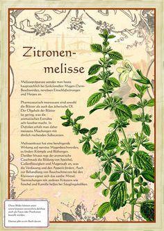 Zitronenmelisse www.kraeuter-verz… citroenmelisse www.kraeuter-dir … Share your vote! Healing Herbs, Medicinal Plants, Natural Healing, Herb Garden, Vegetable Garden, Garden Plants, Spices And Herbs, Lemon Balm, Garden Types