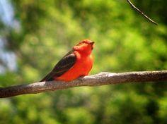 Patagonia-Sonoita Creek Preserve near Patagonia, Arizona, is a lush 770-acre habitat where both bird and plant life are abundant. It is a great bird watching area.