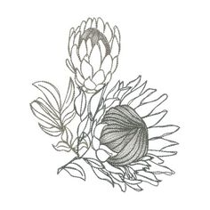 [ Proteas 45 00 Allstitch Machine Embroidery Patterns ] - Best Free Home Design Idea & Inspiration Protea Art, Protea Flower, Flower Sketches, Drawing Sketches, Art Drawings, Sketching, Botanical Art, Botanical Illustration, Botanical Tattoo