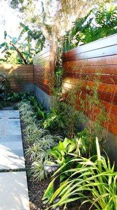 Side yard, garden wall, beautiful contrast of the greenery to the fence and within the plants themselves. Corner Landscaping, Modern Landscaping, Backyard Landscaping, Landscaping Ideas, Traditional Landscape, Contemporary Landscape, Landscape Design, Fence Design, Garden Design