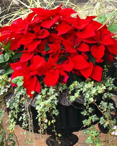 All Things Christmas, Christmas Ideas, Xmas, Winter Planter, Black Rooms, Seasons Of The Year, Plant Decor, Herb Garden, Container Gardening