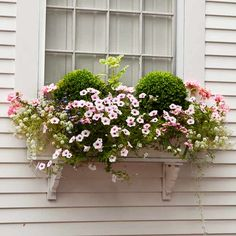 Photo: Deborah Whitlaw Llewellyn | thisoldhouse.com | from Plant a Better Window-Box Garden Boxwood balls ride a wave of pink petunias, sweet alyssum, and geraniums. In Zones 6 and above, a potted boxwood can survive year-round.