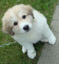 looks like mike's new polar bear puppy!