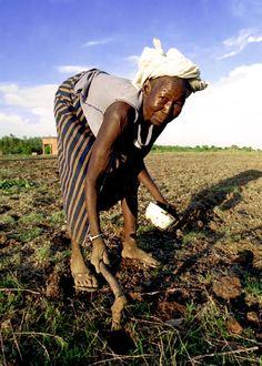 Planting seed . Burkina Faso