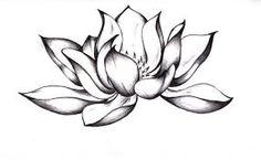Image result for arrow lotus flower