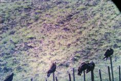 Ornitología en Caceres http://misierradegata.com/fotos/