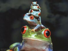 Frog family portrait from Positivity Toolbox