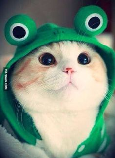 Frosch thinks so too!! So adorable!!!!!