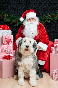 Pet Photos with Santa, photo by: Jenny Karlsson Photography