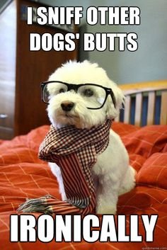 Funny pictures about Hipster dog lost his bone. Oh, and cool pics about Hipster dog lost his bone. Also, Hipster dog lost his bone photos. Love My Dog, Puppy Love, Cutest Puppy, Puppy Find, Puppy Cut, Funny Dogs, Funny Animals, Baby Animals, Animal Memes