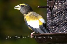 Birding Is Fun!: Fall Feeder Action by Dan Huber