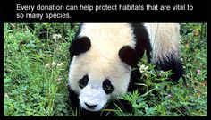 We need your help to protect pandas and other endangered species.