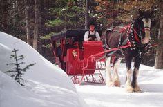 Horse-drawn-sleigh