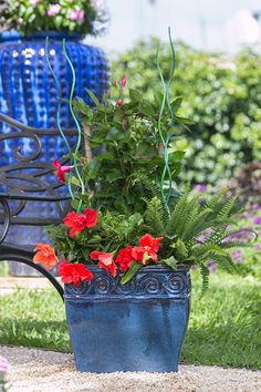 One benefit of most tropical plants is that they love hot weather, so you can count on them to hold up during harsh summer conditions. Marta Maria kept that in mind when she put together this fun mix of super-easy, colorful plants. Her mix includes: Tropic Escape Mandevilla Tropical hibiscus Kimberly Queen fern Outdoor Flowers, Outdoor Planters, Colorful Plants, Tropical Plants, Container Gardening, Gardening Tips, Hibiscus, Flower Pots, Count