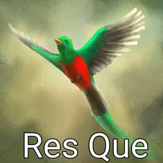 Resplendent Quezal