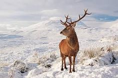 Image result for snow scotland