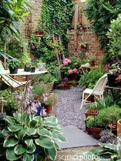 Urban garden, London - use old ladder as trellis for tomatoes and peas?