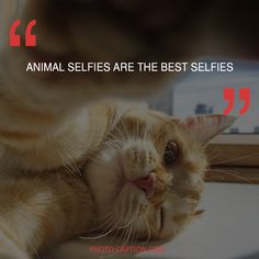 Instagram Captions For Selfies, Selfie Captions, Best Selfies, Photo Caption, Quote Of The Day, Good Things, Lifestyle, Link, Quotes