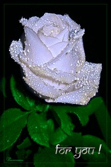 Beautiful Love Flowers, Beautiful Love Pictures, Beautiful Flowers Wallpapers, Beautiful Gif, Love Rose, Roses Gif, Flowers Gif, Pink Flowers, Love Heart Images