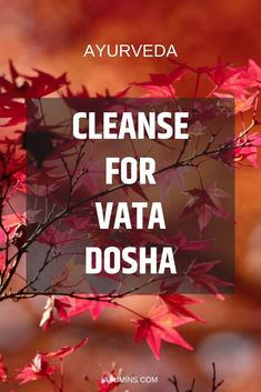 Lear about Cleanse For Vata Dosha. So if you go on a Vata balancing cleanse you need to make sure that you balance yourself with the opposite qualities like moist, smooth, warm, oily and nurturing. Ayurvedic Healing, Ayurvedic Diet, Ayurvedic Recipes, Ayurvedic Medicine, Holistic Medicine, Vata Dosha Diet, Ayurveda Dosha, Optimum Nutrition Whey, Ayurveda Lifestyle
