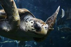 Sea Turtle Conservation Projects: How You Can Help