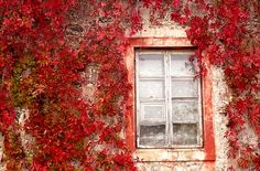Red Windows - Lithuania by robinesrock, via Flickr
