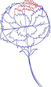 how to draw a carnation flower step 4