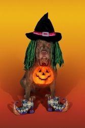 Website Hosts Halloween Costume Contest for Pit Bulls... OMG