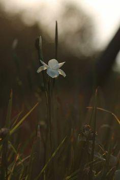 """No hay nada más frágil y más bello que el milagro de la vida. """"La vida crece y crece hasta volver a nacer"""" Arnéth Cohen"""