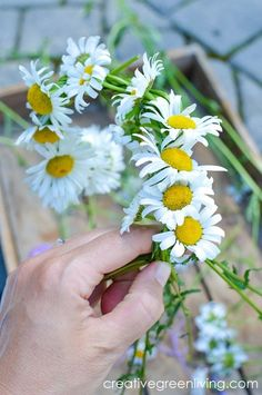 how to make a daisy chain flower crown with real flowers. This easy tutorial will teaching you how to make a DIY floral friendship bracelet, necklace or crown. #daisychain #flowercrown #creativegreenliving