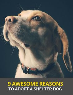 9 Awesome Reasons to Adopt a Shelter Dog