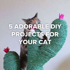 Discover how to make three creative DIY cat toys out of household items. Cats can get bored very easily, which is why you need to keep her interest. Diy Cat Toys, Homemade Cat Toys, Pet Toys, Diy Jouet Pour Chat, Cat Hacks, Photo Chat, Cat Room, Animal Projects, Cat Crafts