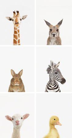 Mieux que de chercher ses anciennes photos du zoo de la Barben.... des portraits fun d'animaux !