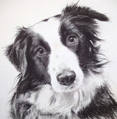 Ellie by William H Jones Dog Portraits, Drawings, Dogs, Animals, Animales, Animaux, Pet Dogs, Sketches, Doggies