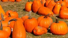 Tired of pest birds pecking away at your pumpkins? Protect your pumpkin patch this season with these tips from Avian Control. Healthy Recipes For Weight Loss, Clean Eating Recipes, October Events, Bird Calls, Small Pumpkins, Visual Display, Pumpkin Recipes, Amazing Destinations, Fall Halloween